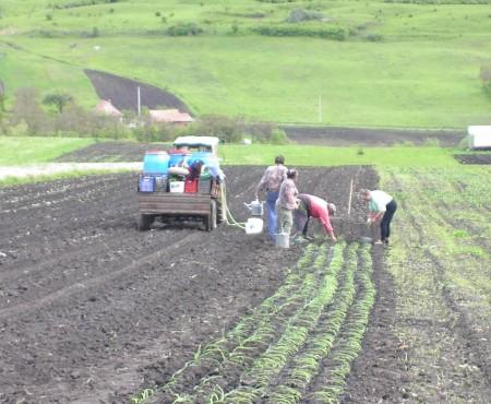 Land & Tuinbouw